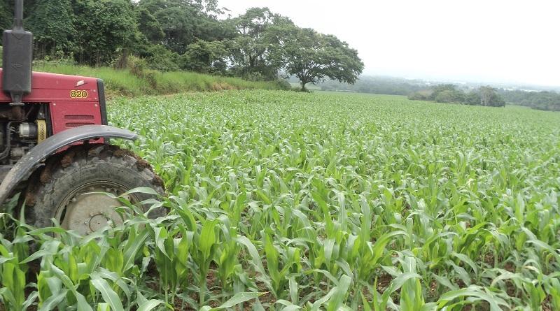 siembra-cultivos-bolivar