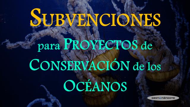 Subvenciones para proyectos de conservación de los océanos