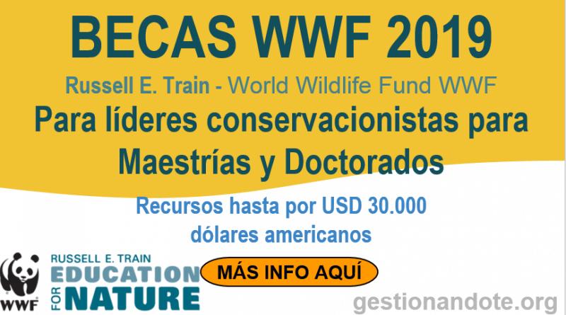 becas wwf 2019